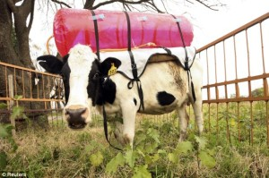 Daily Mail cow methane collector
